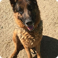 German Shepherd Dog Dog for adoption in San Diego, California - Walker