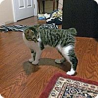 Adopt A Pet :: Stavros - Mississauga, Ontario, ON