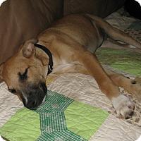 Adopt A Pet :: Marcus-ADOPTED - Somerset, KY