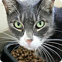 Adopt A Pet :: Arthur - Richland Hills, TX