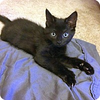 Adopt A Pet :: Millie - Charlotte, MI