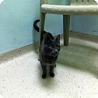 Adopt A Pet :: Turbo - Janesville, WI