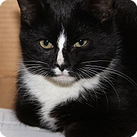Adopt A Pet :: Oakley - Marietta, OH