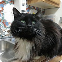 Adopt A Pet :: Tiny Cat - Templeton, MA