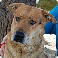 Adopt A Pet :: Turner - Las Vegas, NV