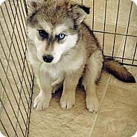 Adopt A Pet :: Tundra - Egremont, AB