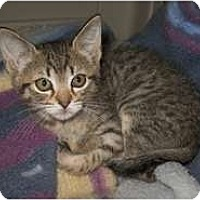 Adopt A Pet :: Baby Doll - Shelton, WA