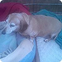 Adopt A Pet :: NATHAN & OSCAR - Portland, OR