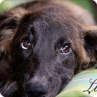 Adopt A Pet :: Liesl aka