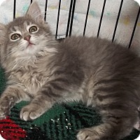 Adopt A Pet :: Butters - Acme, PA