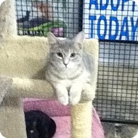 Adopt A Pet :: Dudley - Caistor Centre, ON