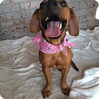 Adopt A Pet :: Mable meet me 9/18 - East Hartford, CT