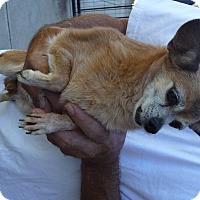 Adopt A Pet :: PEBBLES - SIMI VALLEY, CA