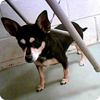 Adopt A Pet :: PERDITA - Conroe, TX