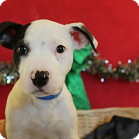 Adopt A Pet :: Frick - Waldorf, MD