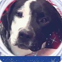 Adopt A Pet :: SEBASTIAN - Red Bluff, CA