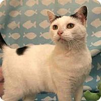 Adopt A Pet :: CAROLINE - Pittsburgh, PA