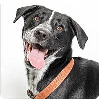 Adopt A Pet :: Wofford - San Luis Obispo, CA