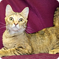 Adopt A Pet :: Julie - Melbourne, KY