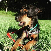 Adopt A Pet :: Milo - Bernardston, MA