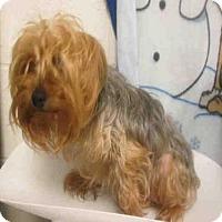 Adopt A Pet :: *SKYE - Upper Marlboro, MD