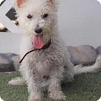 Adopt A Pet :: Corona - Phoenix, AZ
