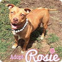 Adopt A Pet :: Rosie - Los Angeles, CA