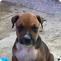 Adopt A Pet :: Mia - Charlotte, NC