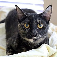 Adopt A Pet :: Sophie - Euless, TX