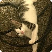 Adopt A Pet :: Aoife - Philadelphia, PA