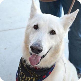 German Shepherd Dog Mix Dog for adoption in Sunnyvale, California - Kimber