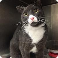 Adopt A Pet :: Finn - Lunenburg, MA