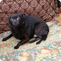 Adopt A Pet :: KITTY - Houston, TX