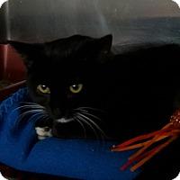 Adopt A Pet :: Clara bell - Henderson, KY