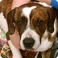 Boxer Mix Dog for adoption in Ringoes, New Jersey - Colt