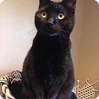 Adopt A Pet :: Juno - Wayne, NJ