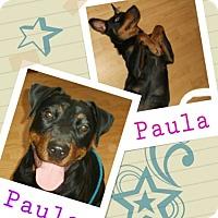 Adopt A Pet :: Paula - Madison, AL