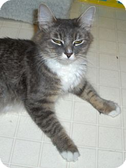 Domestic Mediumhair Cat for adoption in Richmond, Virginia - Annie