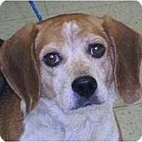 Adopt A Pet :: Sumee - Novi, MI