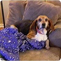 Adopt A Pet :: Ida - Novi, MI