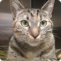 Adopt A Pet :: Momma - Newport Beach, CA
