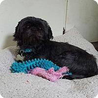 Adopt A Pet :: Magic - Schofield, WI