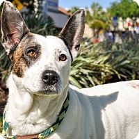 Adopt A Pet :: Aggie - Gainesville, FL