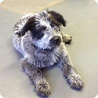 Adopt A Pet :: Trevor - Meridian, ID
