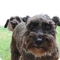 Adopt A Pet :: Fritz - Sharonville, OH