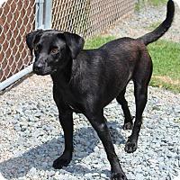 Adopt A Pet :: Molly - Pinehurst, NC