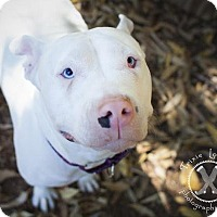 Adopt A Pet :: Sky - Eugene, OR