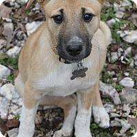 Adopt A Pet :: Karma - Oakland, AR