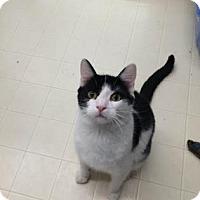 Adopt A Pet :: Oreo - Beatrice, NE