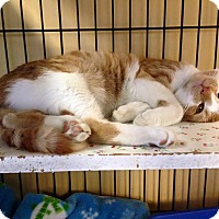 Adopt A Pet :: Rebel - Island Park, NY